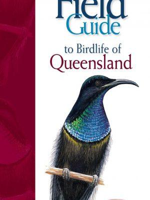 Queensland Pocket Scaled