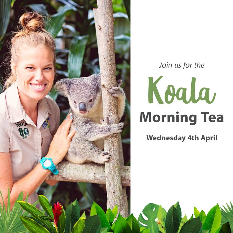 Gf Koala Morning Tea Fb 600x600 (1)