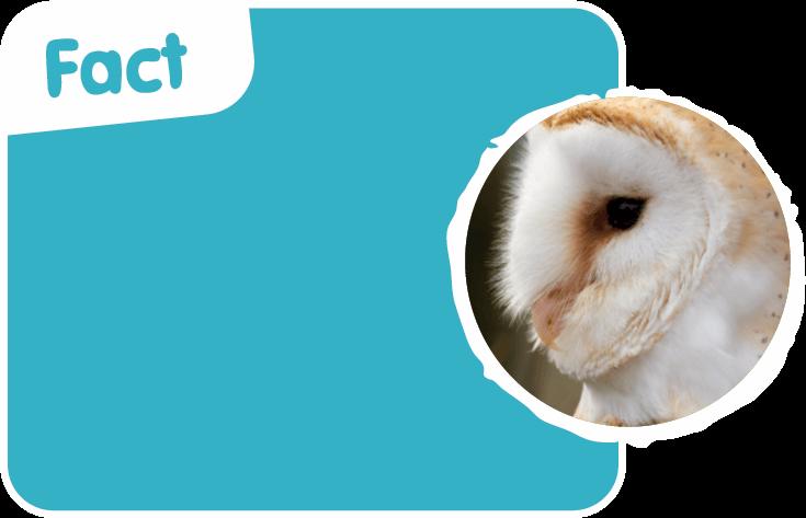 Fact Owl